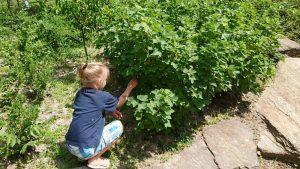 Kind im Naschgarten